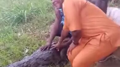Photo of Woman in Ave Dakpa crocodile attack video sustained minor injury