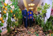 Photo of Bawumia to investors: Come and invest in cocoa processing