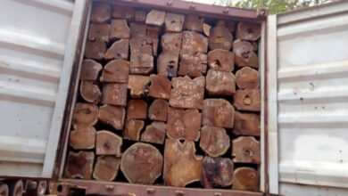Photo of Companies continue to export rosewood to China despite ban – Inusah Fuseini