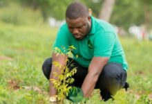 Photo of Support upcoming tree planting exercise – Convener of Green Republic Project