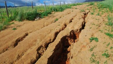 Photo of World Bank approves over $100 million to reverse Ghana's land degradation