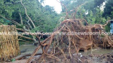 Photo of Rains cause havoc at Tafi Atome Monkey Sanctuary